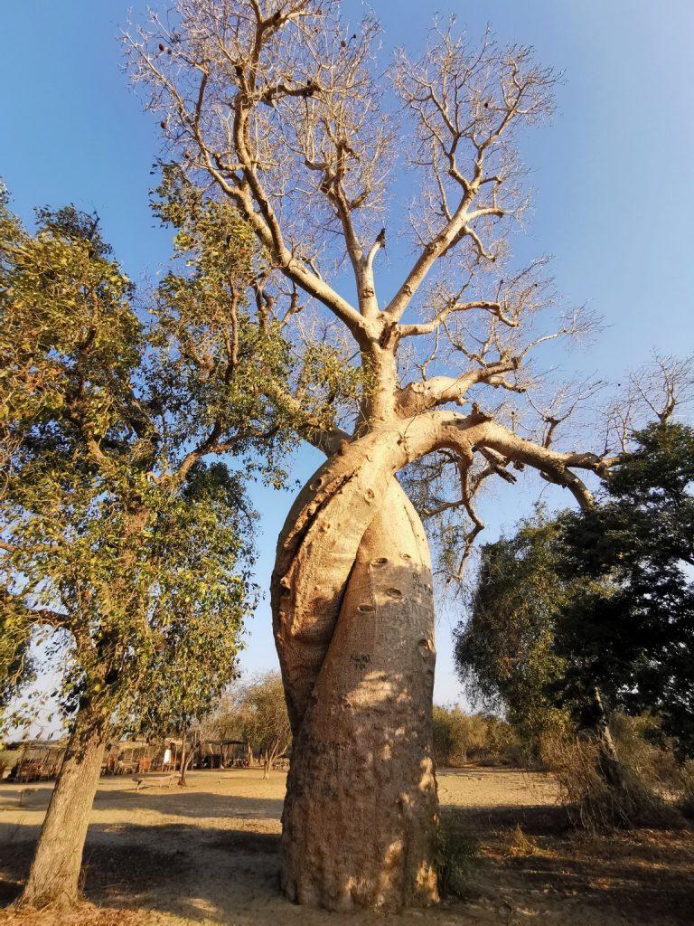 Мадагаскар - страна вашего детства